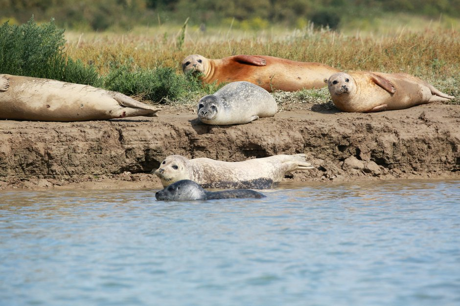 SWNS_THAMES_SEALS_003.jpg