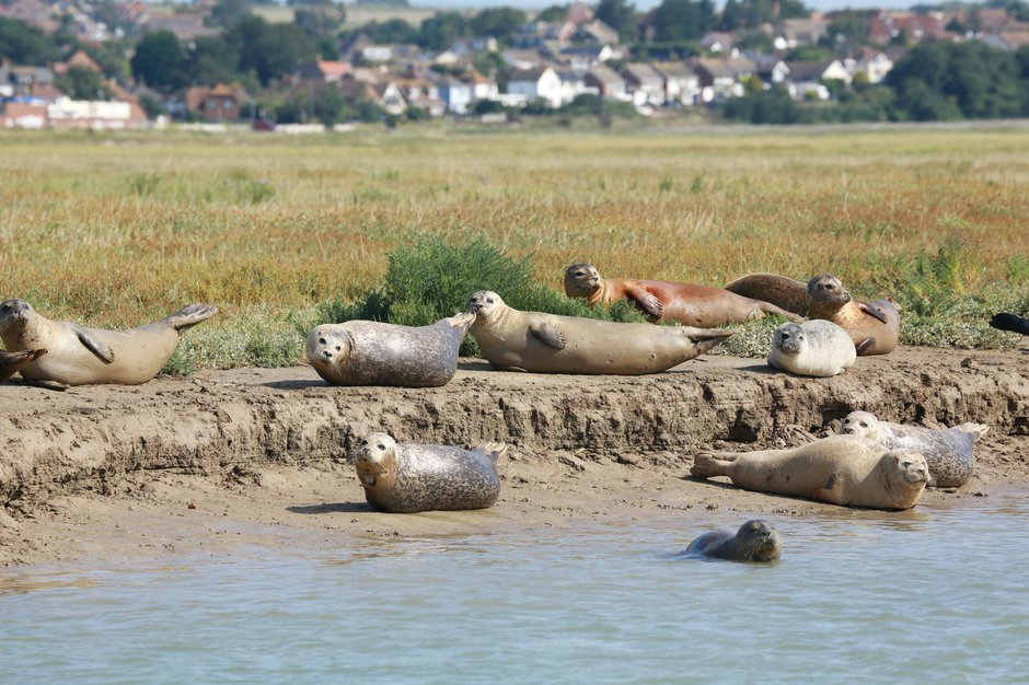 SWNS_THAMES_SEALS_006.jpg