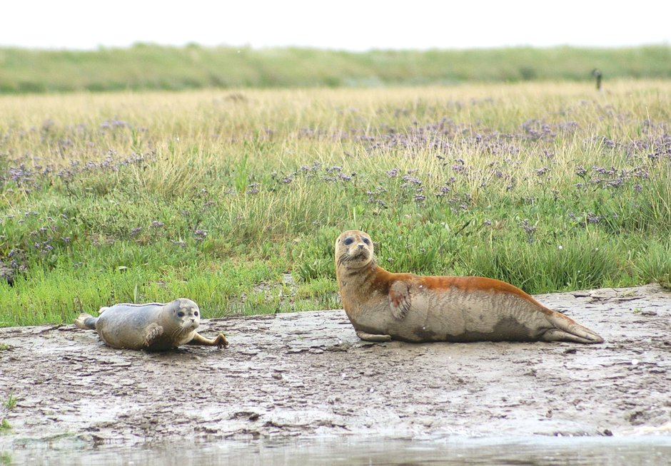 SWNS_THAMES_SEALS_012.jpg